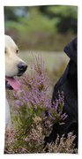 Labrador Retriever Dogs Beach Towel