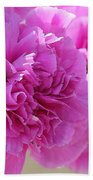 Lavender Carnations Beach Towel