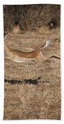Leaping Impala Beach Towel