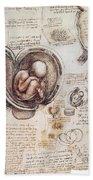 Leonardo: Human Fetus Beach Towel