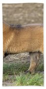 Leonberger Puppy Beach Towel