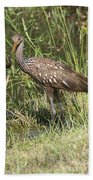 Limpkin In The Glades Beach Towel