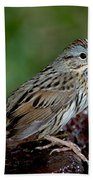 Lincolns Sparrow Beach Towel