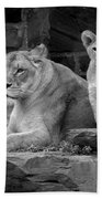 Lioness And Cubs Beach Towel