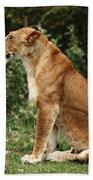 Lioness On The Masai Mara  Beach Sheet