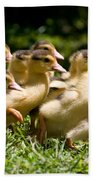 Yellow Muscovy Duck Ducklings Running In Hurry  Beach Towel