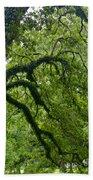 Live Oak Tree At Oak Alley Plantation Beach Towel