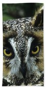 Long-eared Owl Up Close Beach Towel