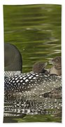 Loon Parent With Two Chicks Beach Sheet