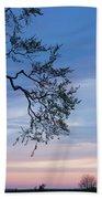 Low Angle View Of Tree At Dawn, Dark Beach Sheet