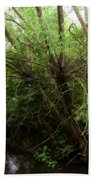 Magical Tree In Forest Beach Towel