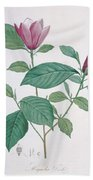 Magnolia Discolor, Engraved By Legrand Beach Towel