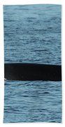 Male Orca Killer Whale In Monterey Bay California 2013 Beach Towel