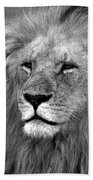 Masai Mara Lion  Beach Towel