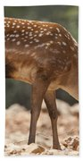 Mesopotamian Fallow Deer 2 Beach Towel