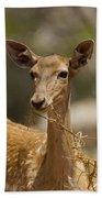 Mesopotamian Fallow Deer 3 Beach Towel