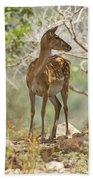 Mesopotamian Fallow Deer 5 Beach Towel