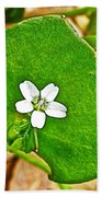 Miner's Lettuce In Park Sierra Near Coarsegold-california  Beach Towel