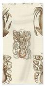 Molluscs Or Soft Worms Beach Towel