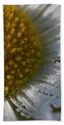 Mornings Dew Beach Towel