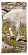 Mountain Goat On Mount Evans Beach Towel