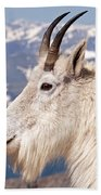 Mountain Goat Portrait On Mount Evans Beach Towel
