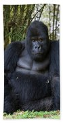Mountain Gorilla Silverback Beach Towel