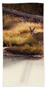 Mule Deer   #3942 Beach Towel