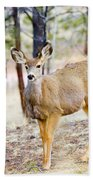 Mule Deer Does Beach Towel