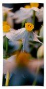 Narcissus Tazetta Beach Towel