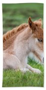 New Born Foal, Iceland Purebred Beach Towel