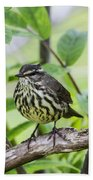 Northern Water Thrush Beach Towel