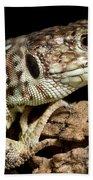 Ocellated Lizard Timon Lepidus Beach Towel