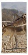 Onager Equus Hemionus 1 Beach Towel