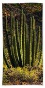 Organ Pipe Cactus  Beach Towel