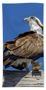 Osprey With Fish In Talons Beach Towel