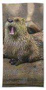 Otter North American  Beach Towel