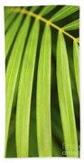 Palm Tree Leaf Beach Towel by Elena Elisseeva