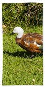 Female Paradise Duck Beach Towel