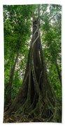 Parasite Consuming A Tree Beach Towel