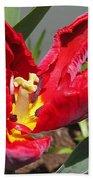 Parrot Tulip Named Rococo Beach Towel