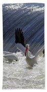 Pelican Drama Beach Towel