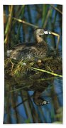 Pied-billed Grebe Nesting Texas Beach Towel