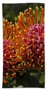 Pincushion Flowers Beach Towel