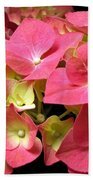 Pink Hydrangea Flowers Beach Towel