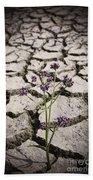 Plant Growing Through Dirt Crack During Drought   Beach Towel