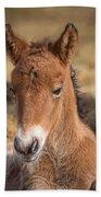 Portrait Of Newborn Foal Beach Towel