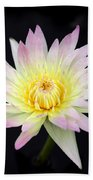 Pretty Pink And Yellow Water Lily Beach Towel