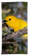 Prothonotary Warbler Beach Towel