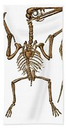 Pterodactylus, Extinct Flying Reptile Beach Towel